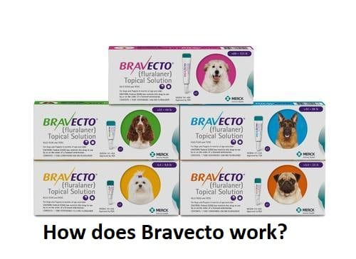 HOW FAST DOES BRAVECTO WORK