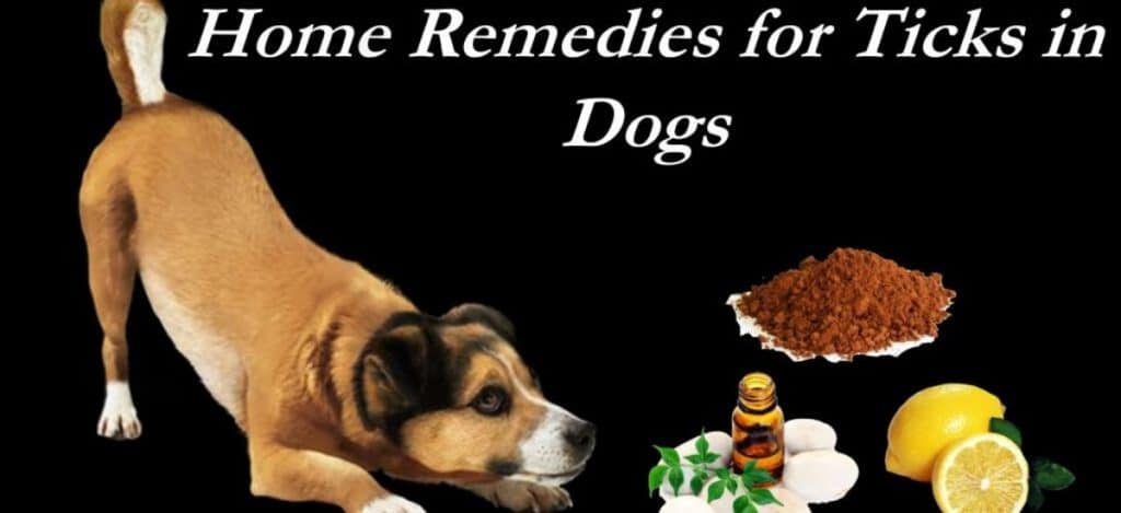Natural and home remedy for heartworms prevention