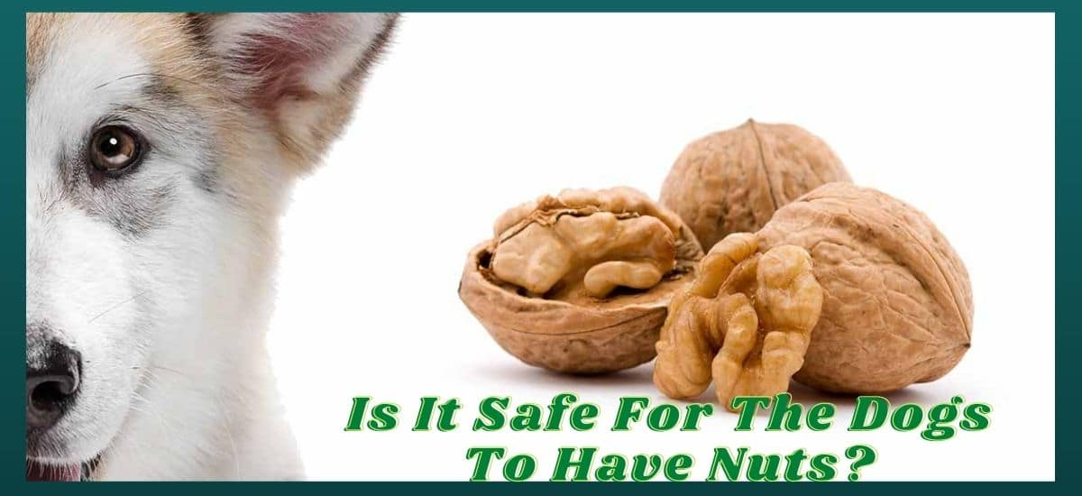 Can dogs have nuts