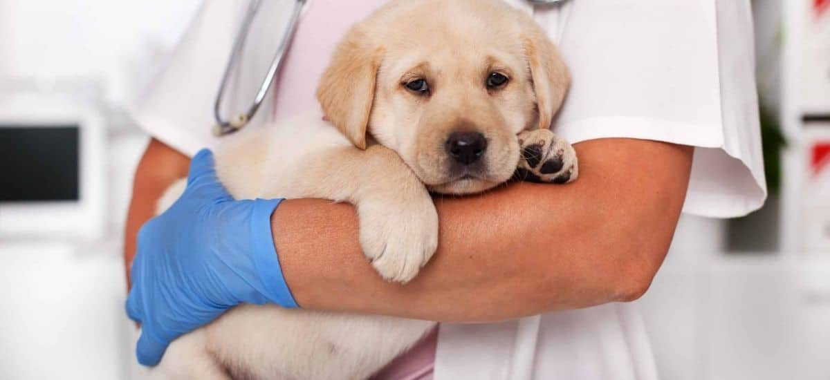 home remedies for kennel cough