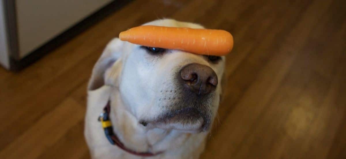 Are Carrots Hard For Dogs To Digest