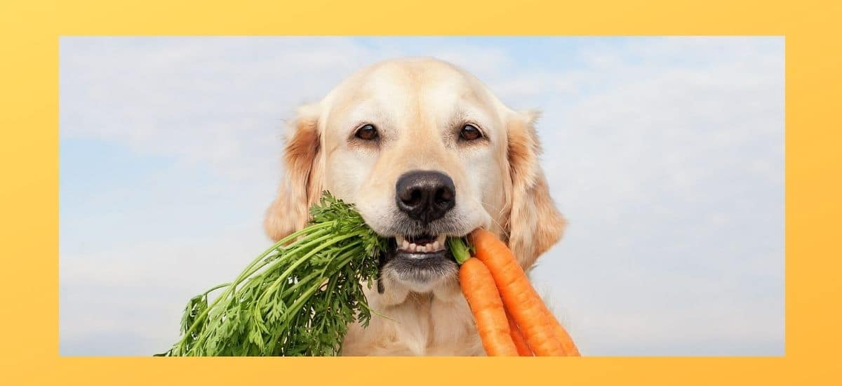 Benefits Of Carrots For Dogs