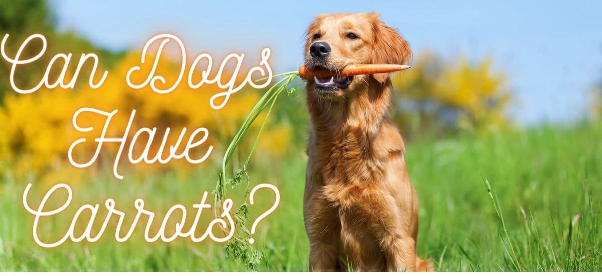 Can Dogs Have Carrots?