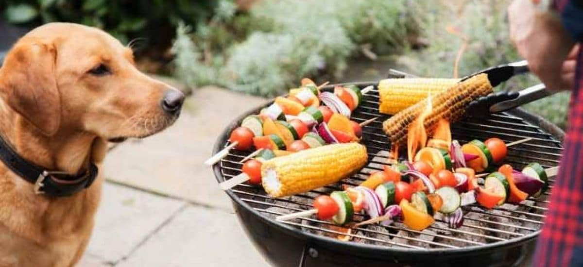 can dogs eat corn cobs