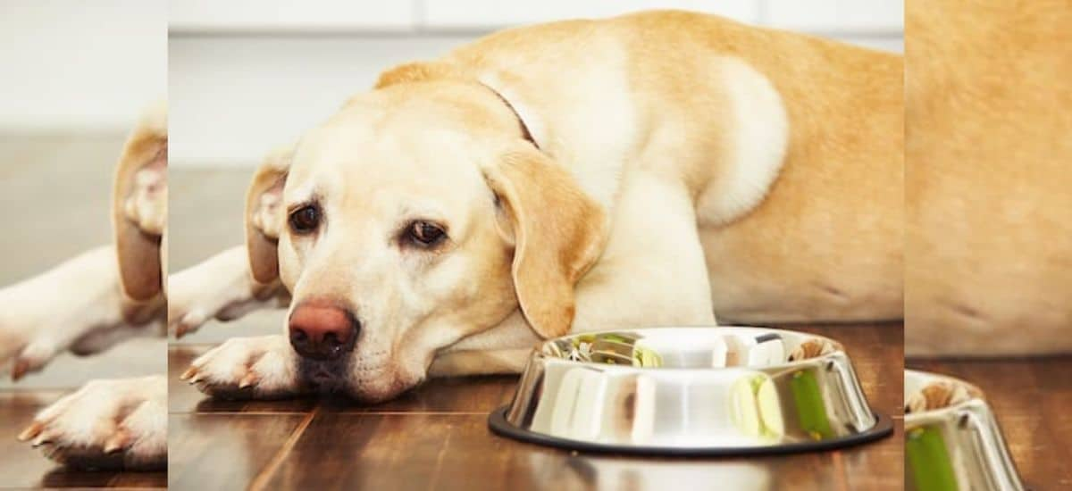 dog not eating but drinking water and vomiting treatment